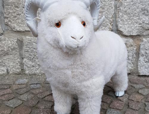 Unser Schaf